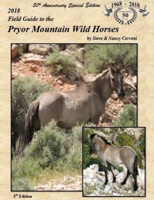 Pryor Mountain – Wild Mustang Center
